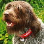 SCHWEIKERT Hunde-Signalglocke